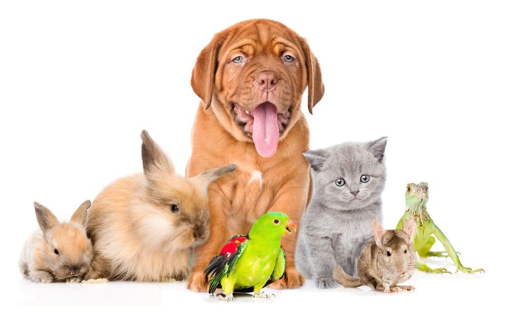 Fotografia de vários animais