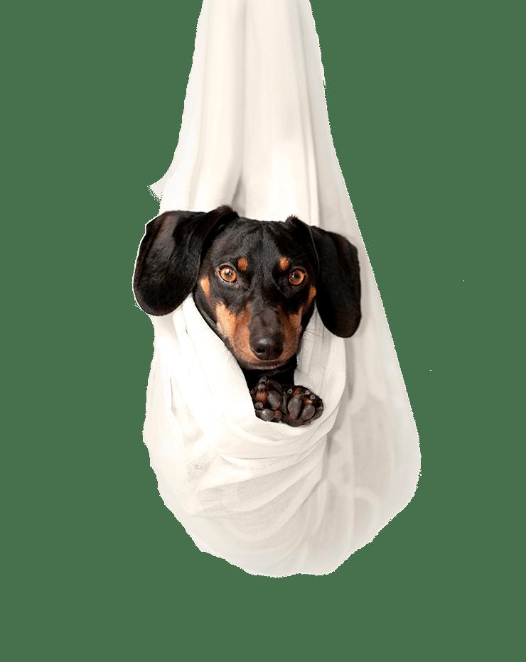 Cão suspenso em lençóis