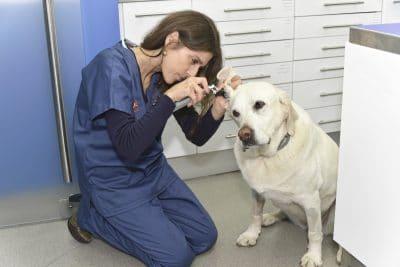 Médica veterinária examinando cão