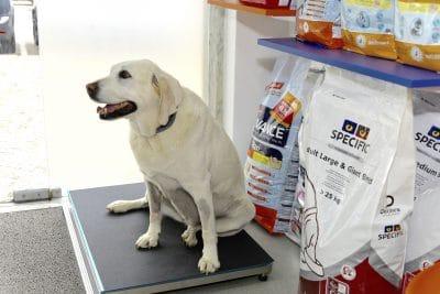 Foto do interior da clínica Easyvet com um cão