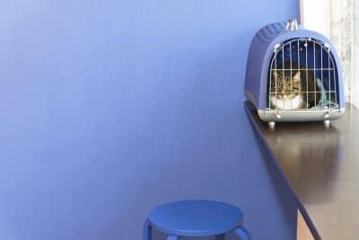 Foto do interior da clínica Easyvet com gato