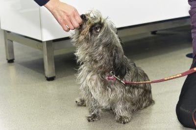 Cão na clínica Easyvet
