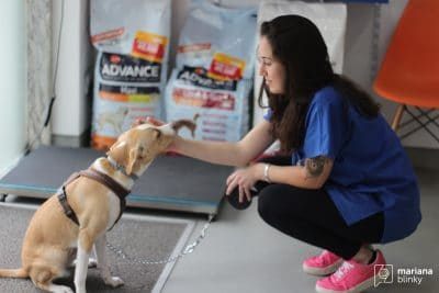 Veterinária com cão