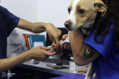 Diagnóstico a cão